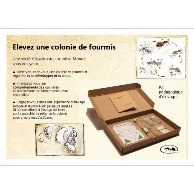Kit pédagogique d'élevage de fourmis
