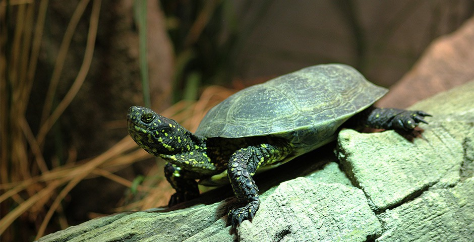 Reptiles Farm